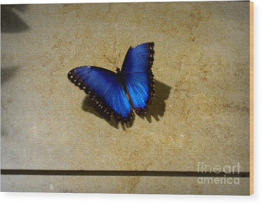 Flawed Beauti-fly Wood Print by Nicole Tru Photography