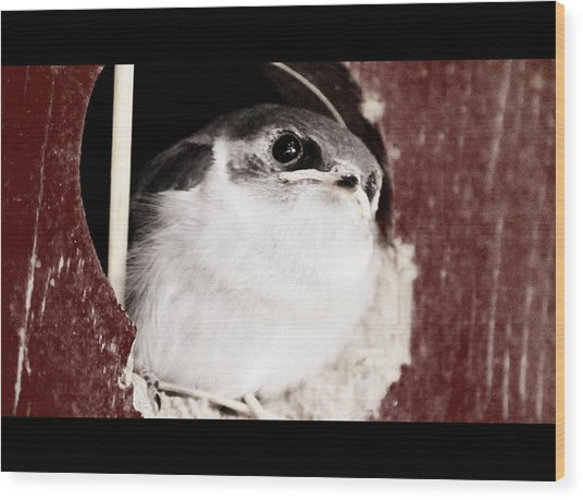 Fledgling Curiosity  Wood Print