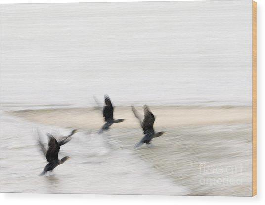 Flight Of The Cormorants Wood Print by David Lade