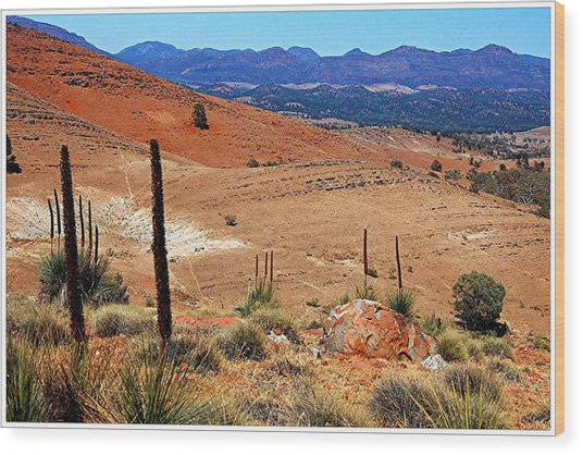 Flinders Ranges Hucks Lookout Wood Print by Patricia Tapping