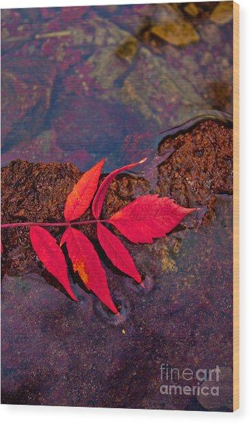 Floating Fall Sumac Wood Print