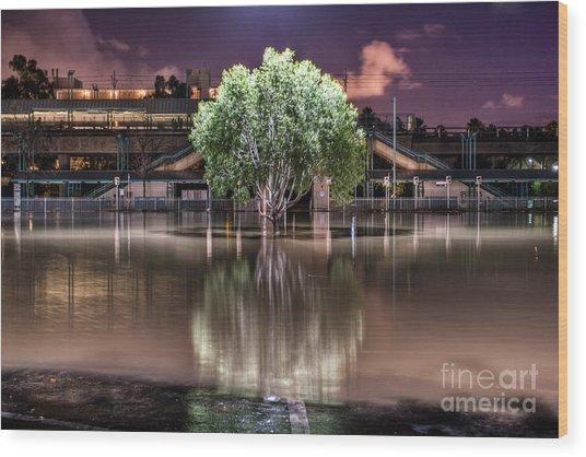 Flooded Tree Wood Print