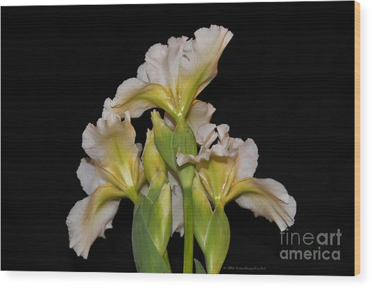 Floral White Iris Buds Flower Bouquet Wood Print