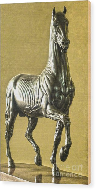Florence Italy - Anatomical Horse Statue - Medici Palace Wood Print