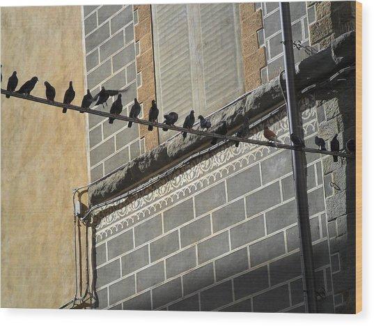 Florentine Pigeons Wood Print