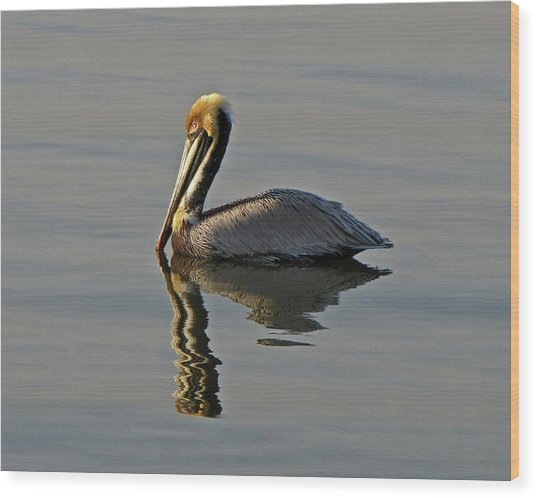 Florida Pelican Wood Print