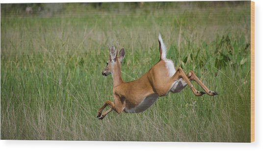 Florida White Tail Wood Print