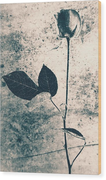 Flower Art Wood Print by Falko Follert