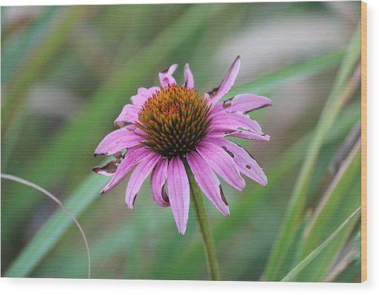Flower At Waterfall Glen Forest Preserve Wood Print