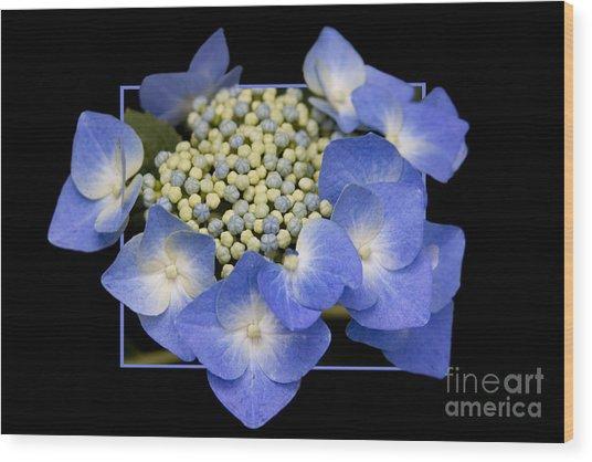Flower In Frame -11 Wood Print