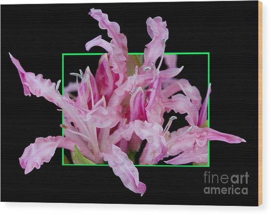 Flower In Frame -13 Wood Print