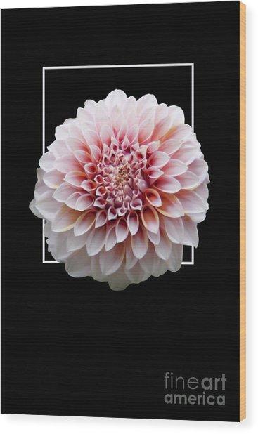 Flower In Frame -4 Wood Print