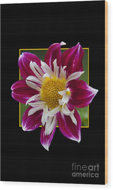 Flower In Frame -5 Wood Print