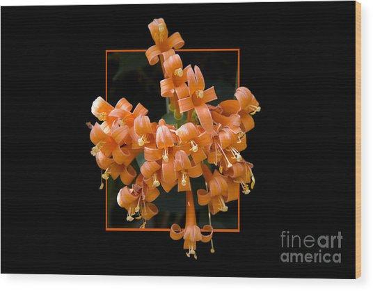Flower In Frame -6 Wood Print