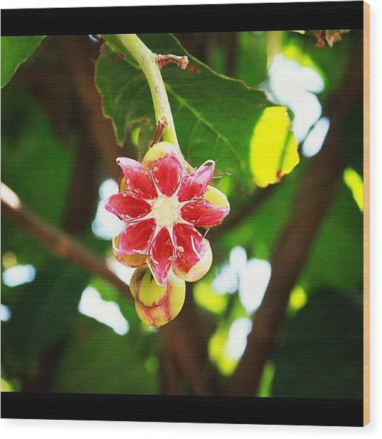 Flower Or Fruit?? Another Wonder Of Wood Print