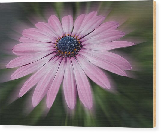 Flower Zoom Wood Print