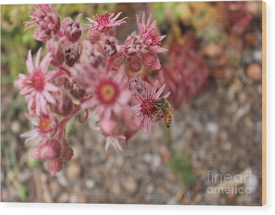 Flowers With Bee Wood Print