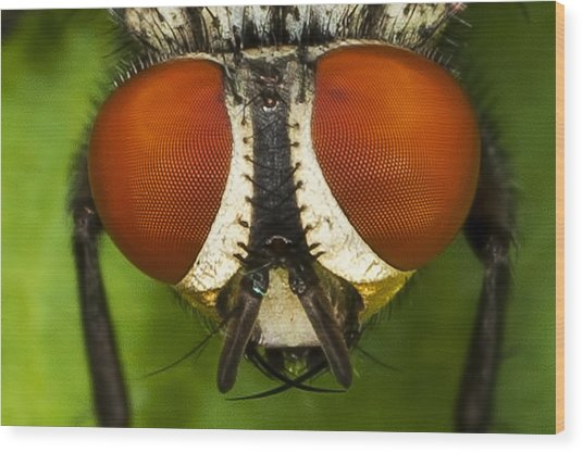 Fly Eyes Wood Print