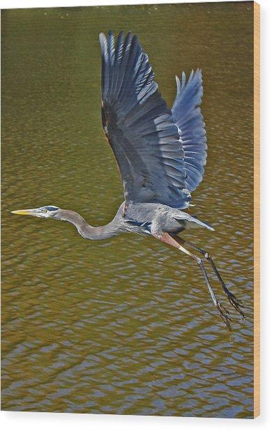 Flying Blue Heron Wood Print