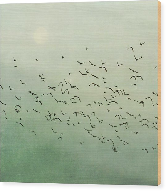 Flying Flock Of Birds Wood Print by Laura Ruth