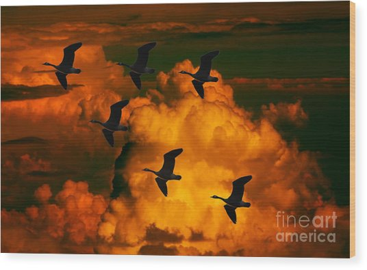 Flying High In The Sky Wood Print
