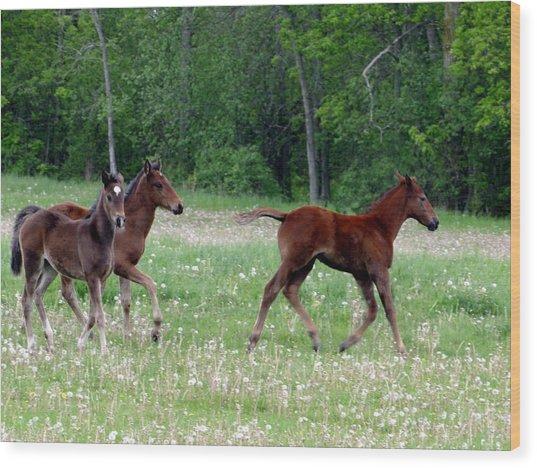 Foals In Dandelions Wood Print