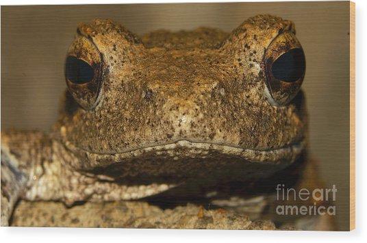 Foam Nesting Frog Wood Print