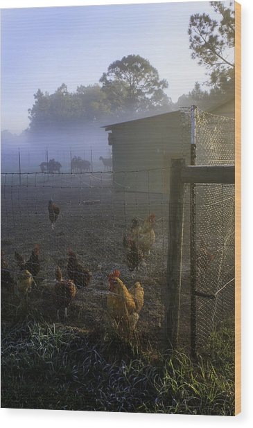 Foggy Florida Farm Morning Wood Print