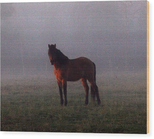 Foggy Morning Greeting Wood Print