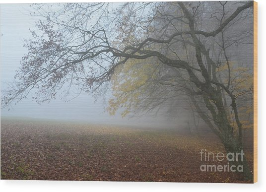 Fogy Forest In The Morning 1 Wood Print