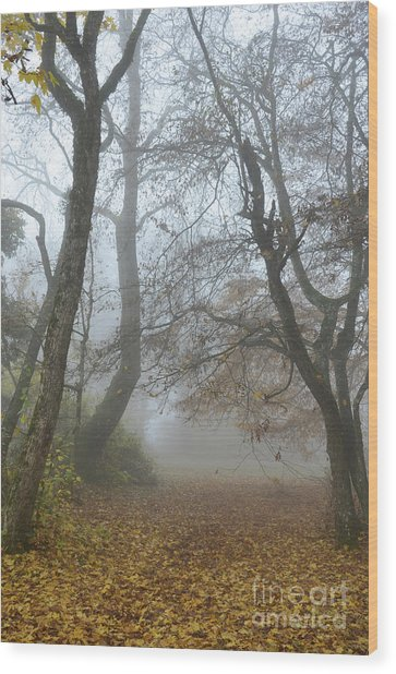 Fogy Forest In The Morning Wood Print