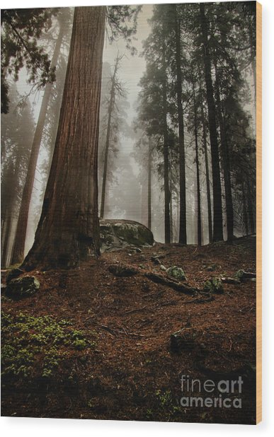 Forest Floor And Fog Wood Print