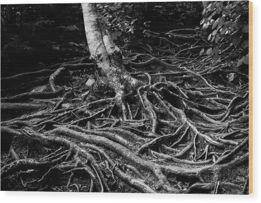 Root Detail Wood Print