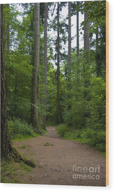 Forest Trail Wood Print by Ron Telford