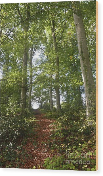 Forest Way Wood Print