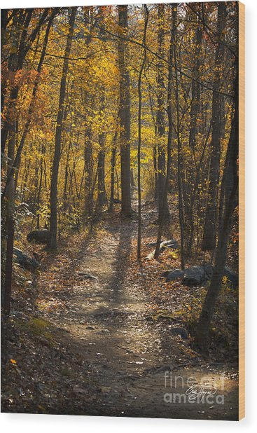 Forrest Of Gold Wood Print