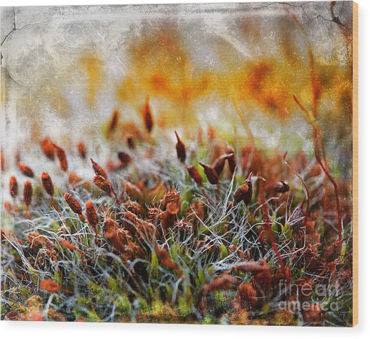 Forrest Of Moss Wood Print