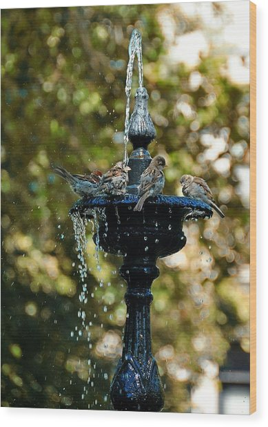 Fountain Bathing Wood Print by JAMART Photography