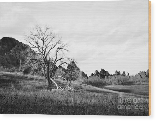 Fountain Valley In Black And White Wood Print