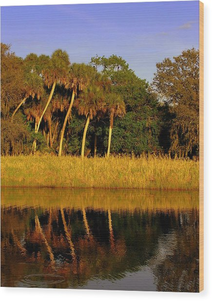 Four Palms Reflecting In Myakka Lake Wood Print