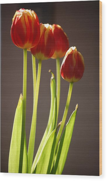 Four Tulips Wood Print by Dickon Thompson