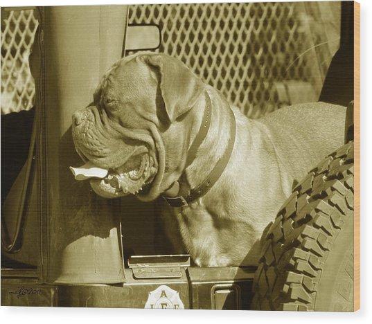 Frank The Dog 7827 In Sepia Wood Print by Maciek Froncisz