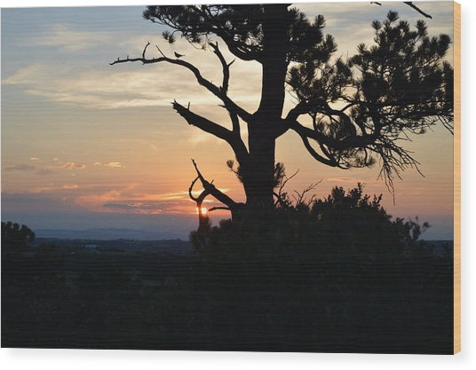 Franktown Colorado Summer Wood Print by Ann Marie Chaffin