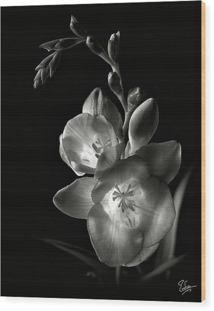 Freesia In Black And White Wood Print