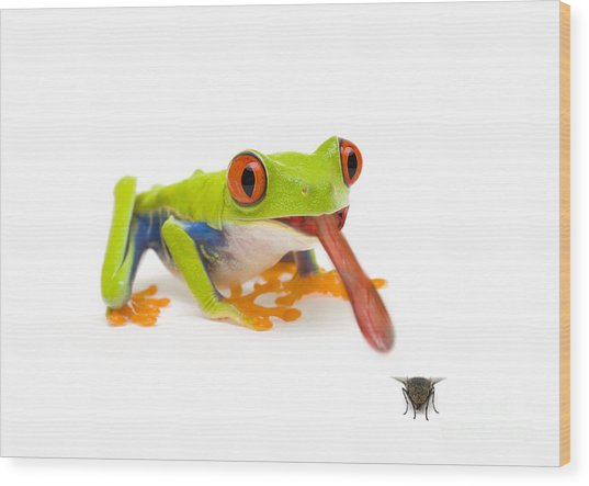 Frog Eating Fly Wood Print