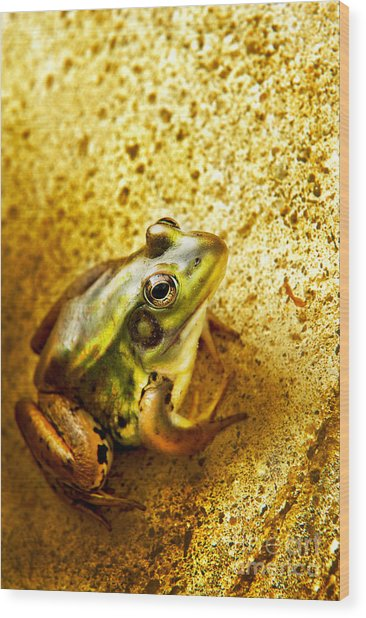 Frog Wood Print by HD Connelly