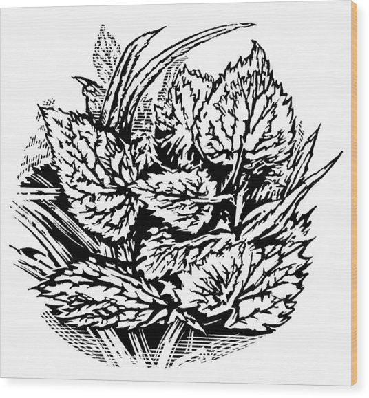Frost On Leaves, Woodcut Wood Print by Gary Hincks