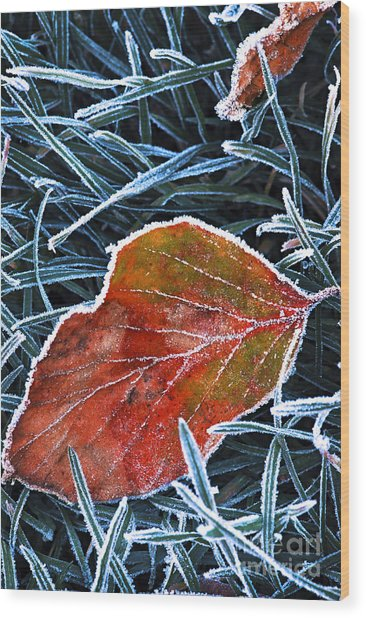 Frosty Leaf Wood Print