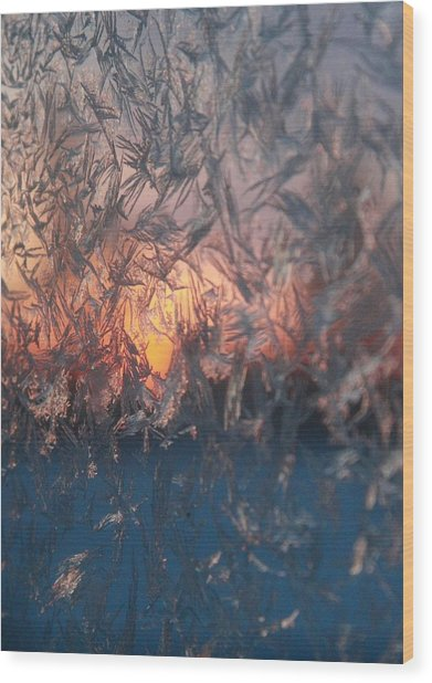 Frosty Sunrise Wood Print