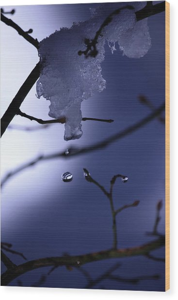 Frozen But Still Wet Wood Print by Christine Gauthier